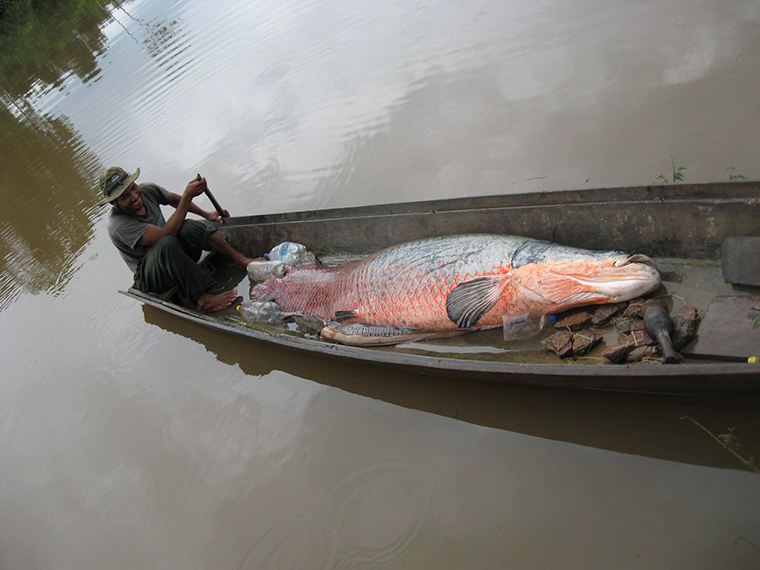 A Bolivian fisherman on a tributary of the Amazon River.