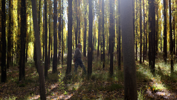 A man walks through forest in a touristic area of the Uspallata valley.