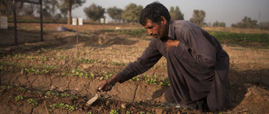 A man farming in a field in Pakistan.