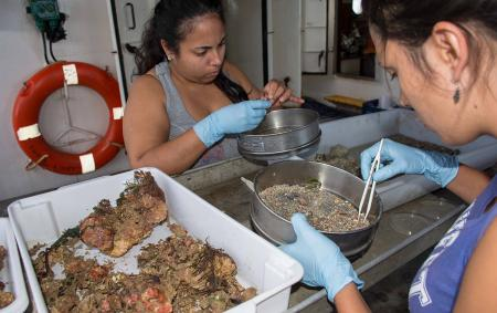 Members of a research team pick through samples pulled from the Atlantic Ocean.