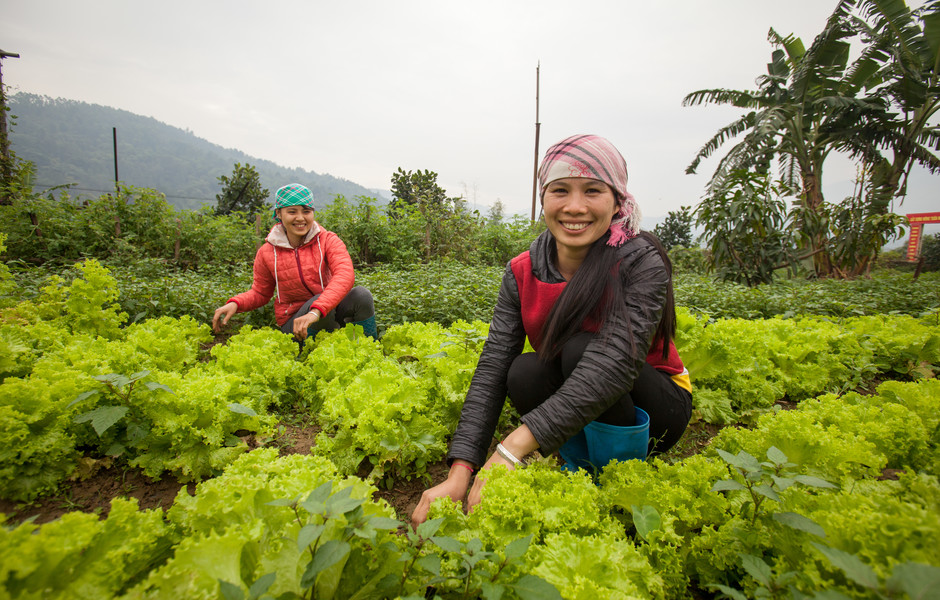 Su Thi Lieu and Lieng Thi Dung ((L to R) tend to the greens growing on the farm.