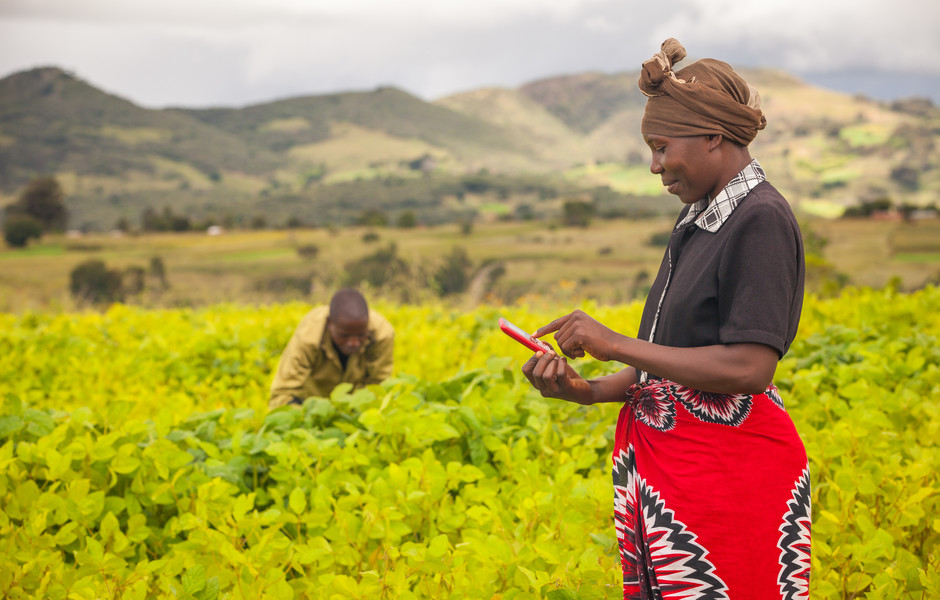 Tumsifu Lucas Sanga texts other farmers to discuss what she and Isaac Daniel Nkyani have observed in the soybean field.