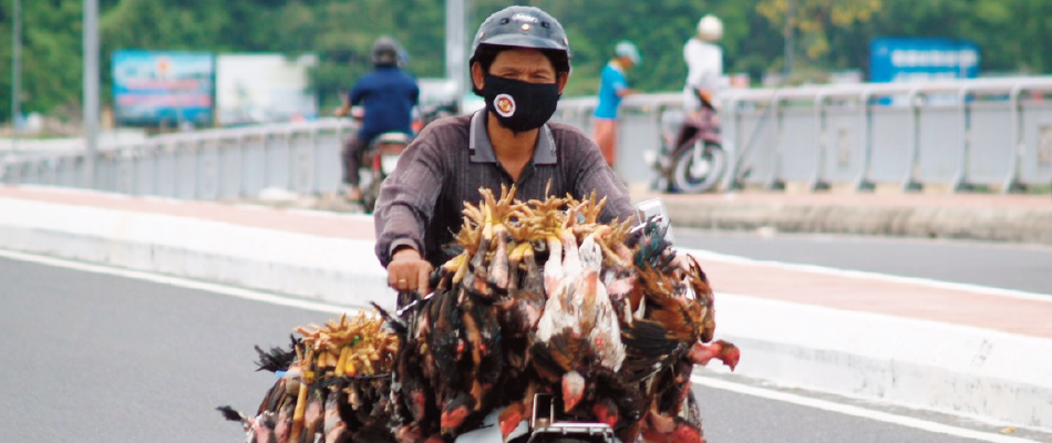 Itinerant poultry buyer in Vietnam