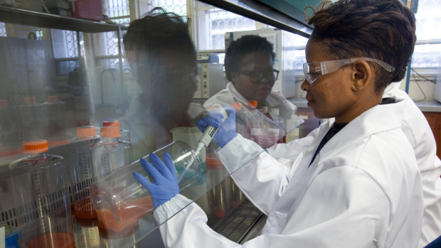 A scientist in South Africa harvests an antigen for vaccine production.