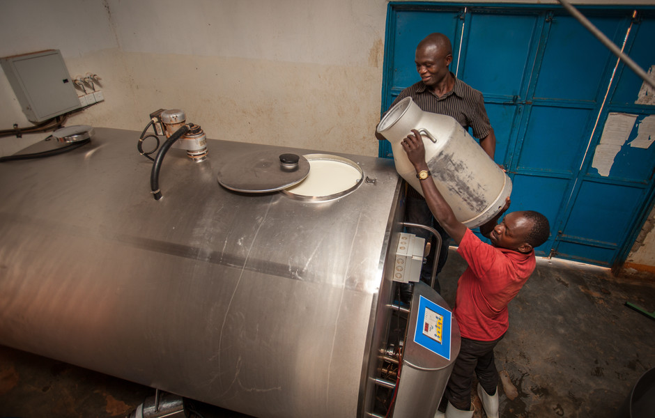 Ssaka Daniel, head of the Dairy Farmer's Co-operative Society in Kinyogoga, Uganda, pours a container of fresh milk into the chiller.