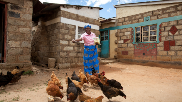 Photo of a woman feeding her brood of chickens in Kwale Village Kenya.