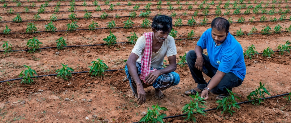 Farmer who is successfully using drip irrigation in his farm in village Hodanahalli.