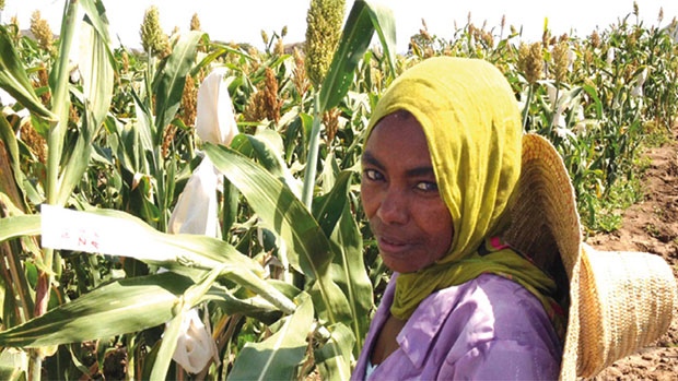 a young woman farmer in a corn field