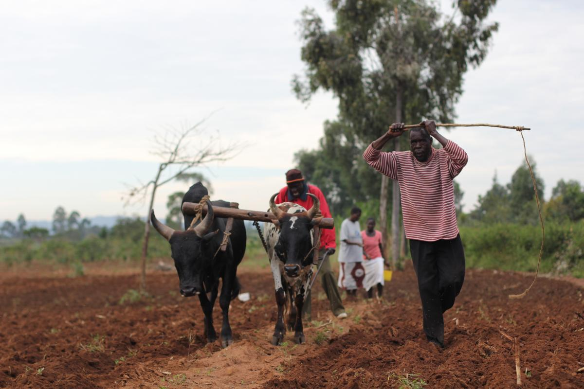 Tobacco farmers in Africa