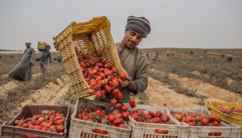Picture of farmer and produce