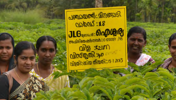 Farmers in Tamil Nadu adopted locally-adapted cassava, boosting agro-biodiversity while enhancing yields and income