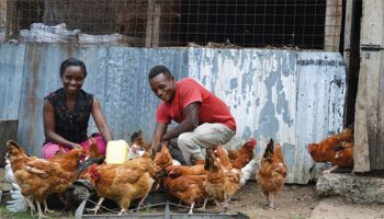 a woman and man attending to chickens